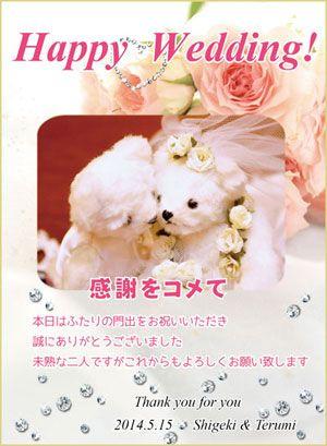 結婚式のお米プチギフトバラ(一番人気)
